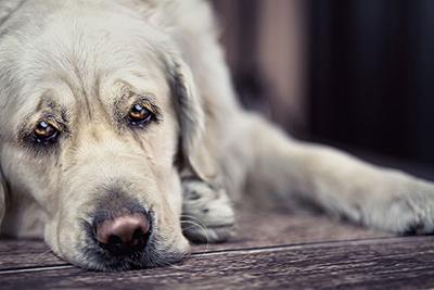 狗狗不喜欢主人做的事情,可能你正在做哦!